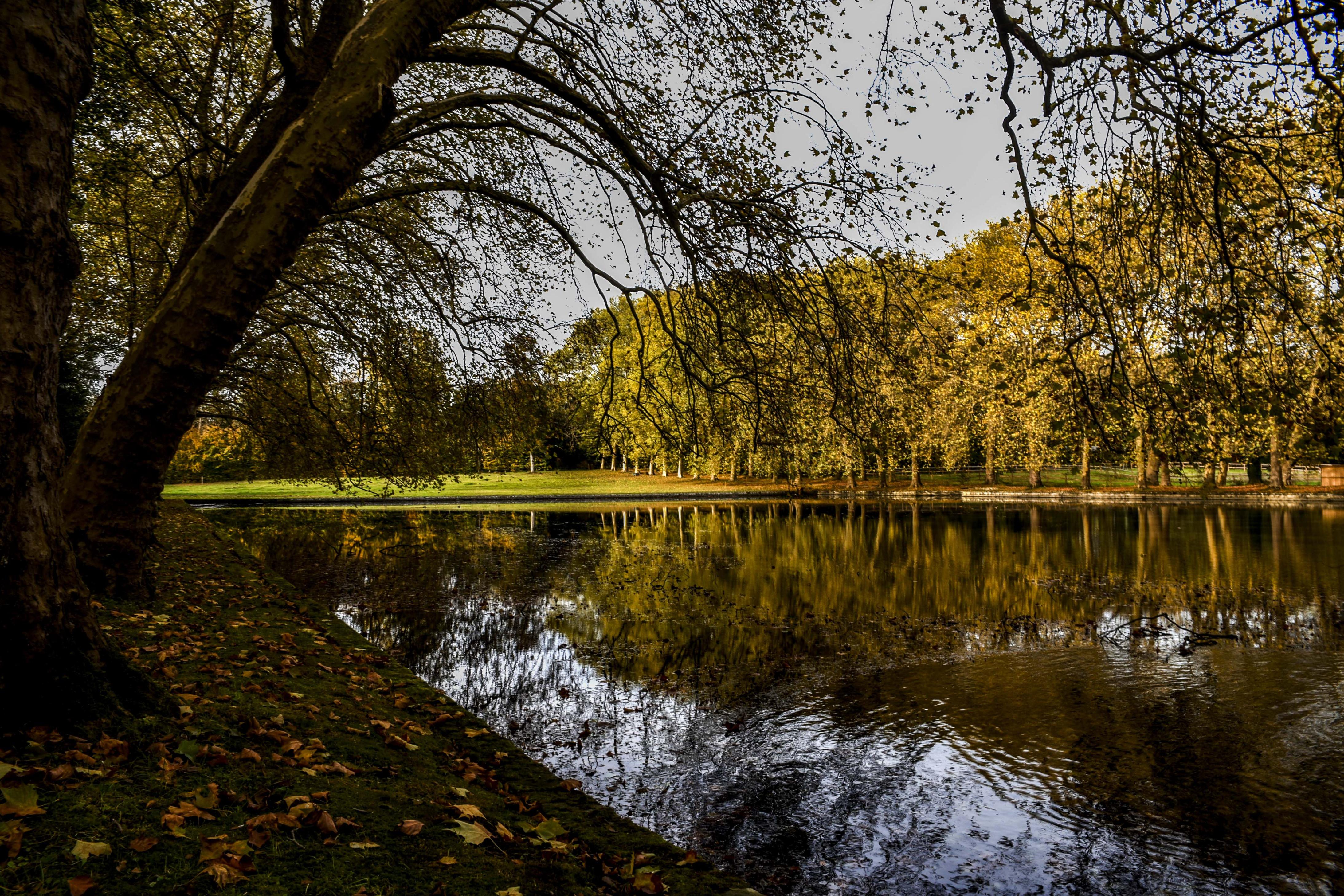 Chateau-de-Courances-Parc-Essonne-6