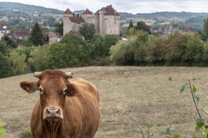 Occitanie vache